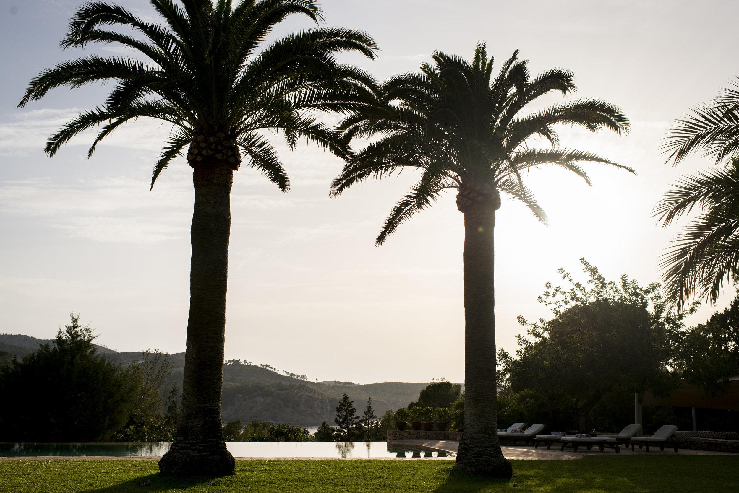 CasalaVista_palm trees.jpg