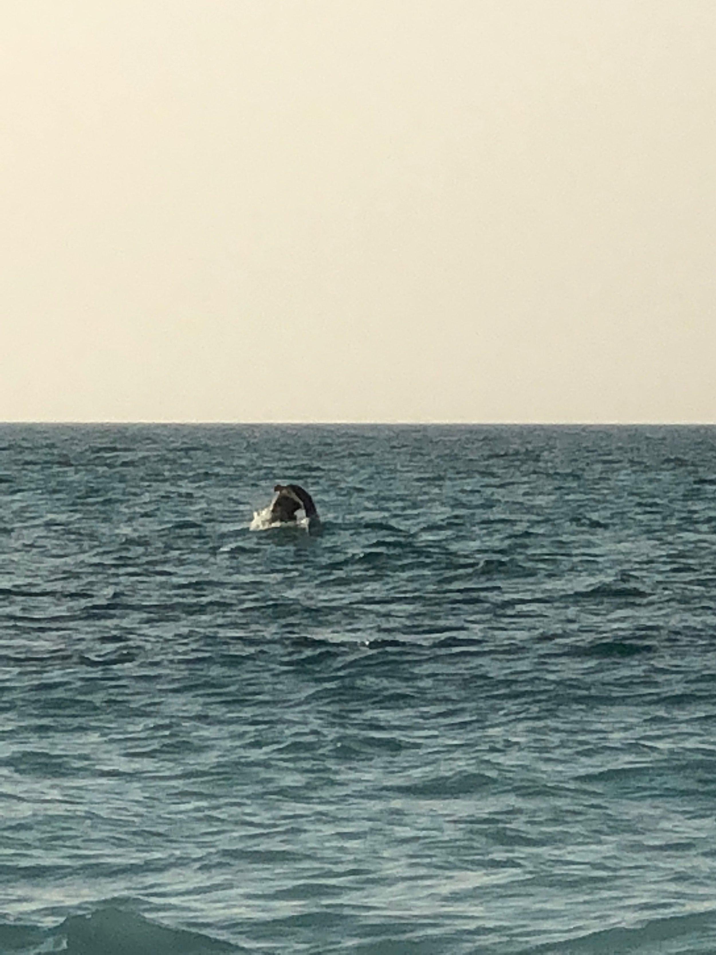 dolphins in abu dhabi.jpg