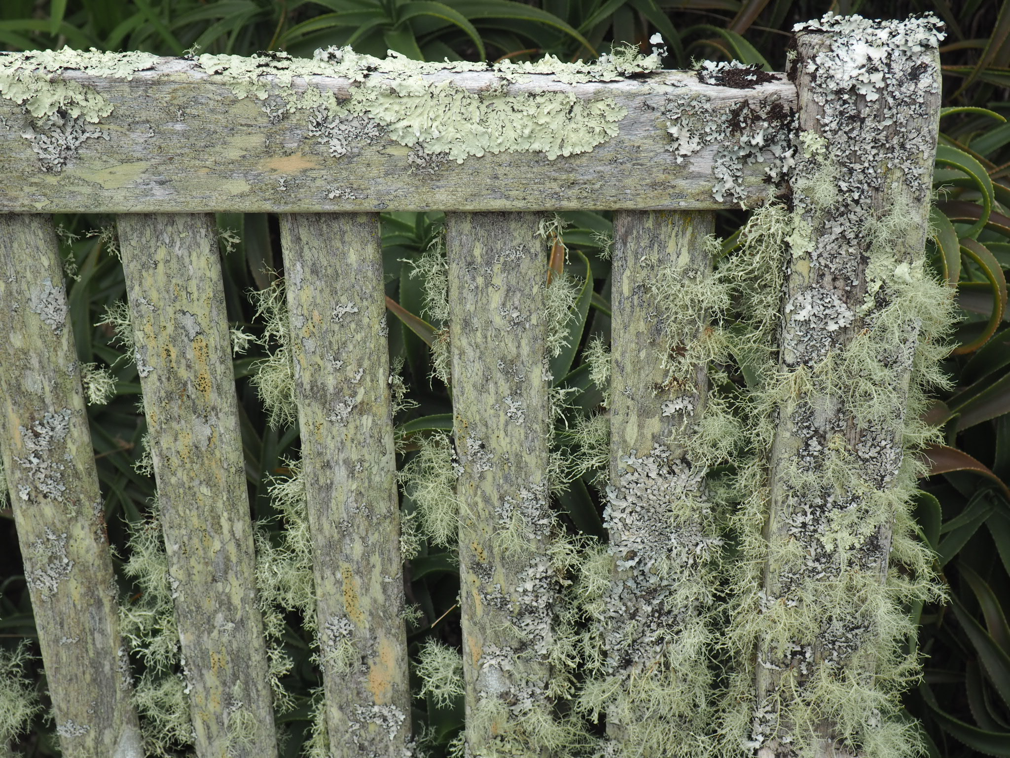Close up of flora on garden bench at Tresco Abbey Gardens.jpg