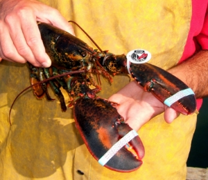 Maine Lobster Promotion Cooperative photo