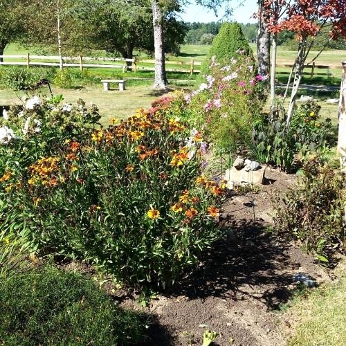 Photo of the late season garden taken in September by 1802 House B&B.