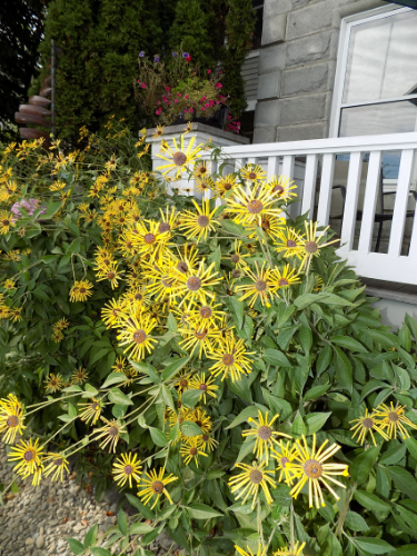Yellow flowers flank the deck at the Granite Inn. Photo by Marti Mayne.