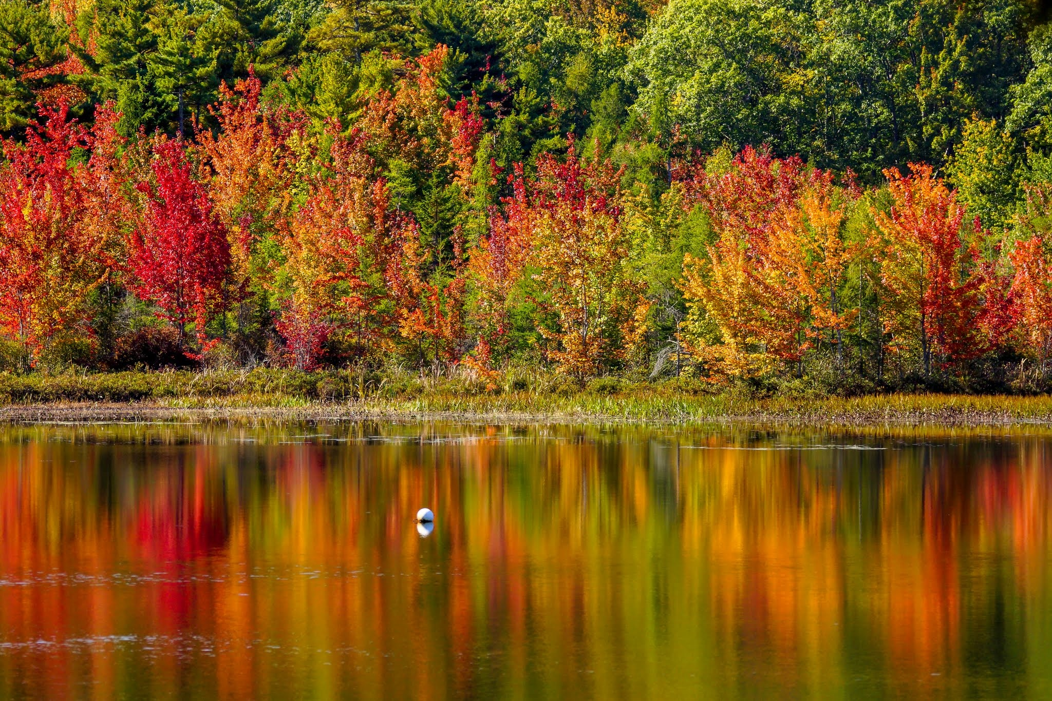 This is the kind of gorgeous fall foliage you'll see along the coast in Midcoast Maine. Photo by PJ Walter Photography.