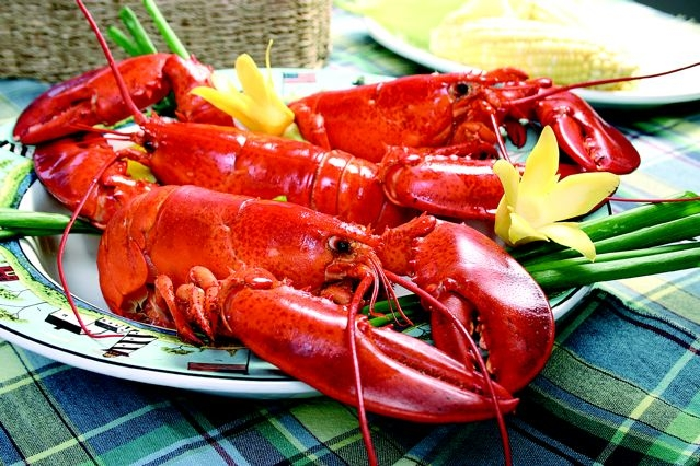 Lobster is still in ample supply up and down the Maine Coast. Photo provided by the Maine Lobster Promotion Council.