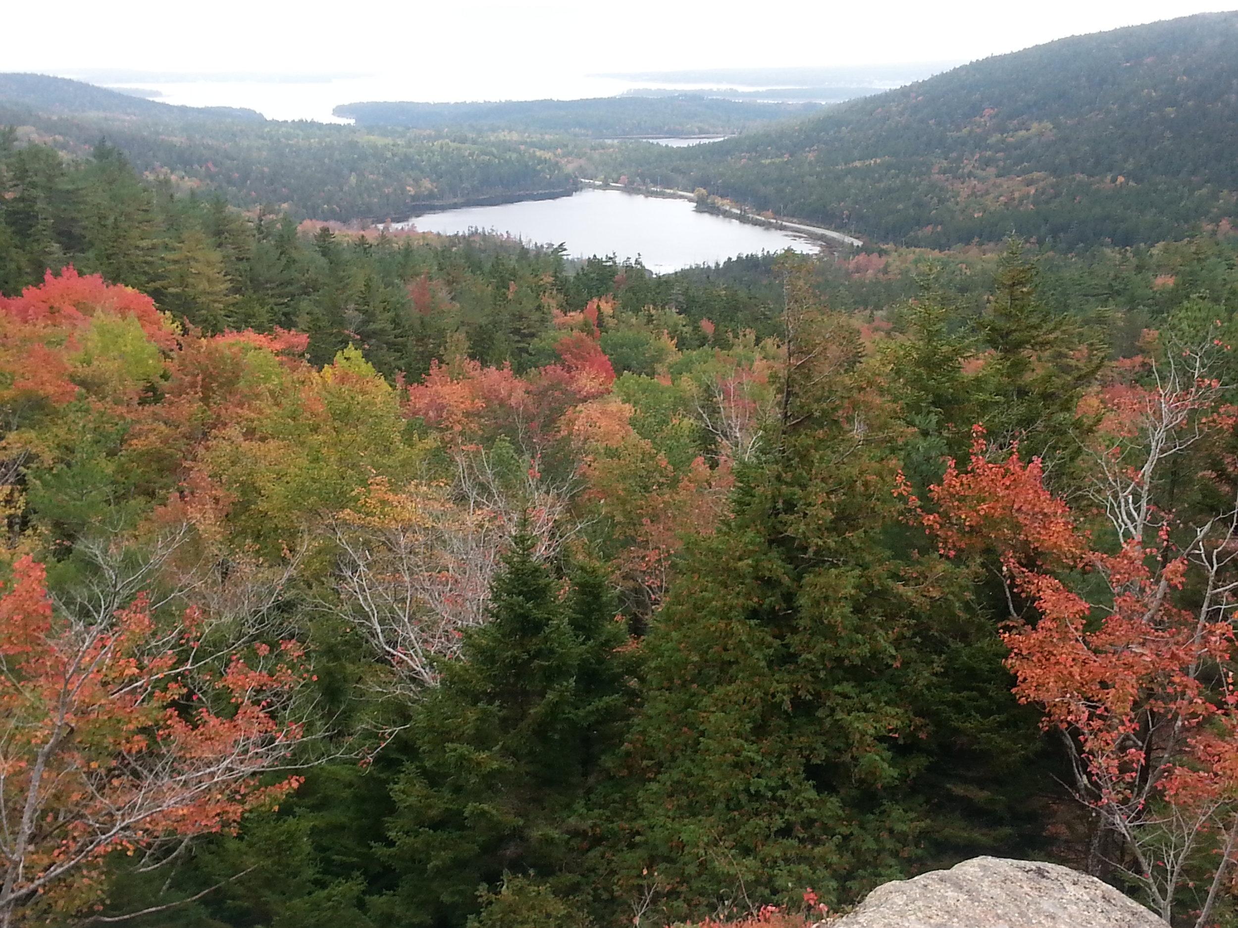 Fall views in Acadia. Photo by  Kristi Losquadro.