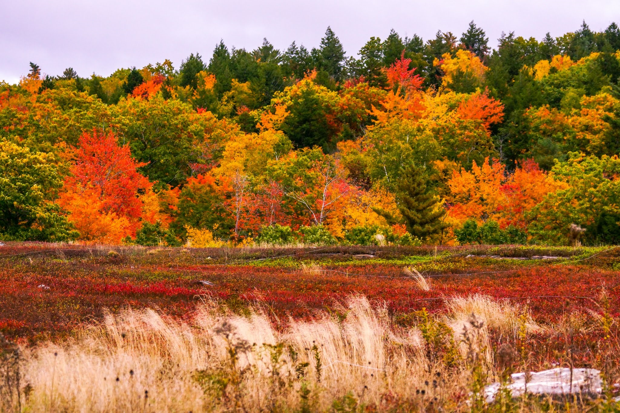 Fall color along Midcoast Maine. Photo by  PJ Walter Photography .