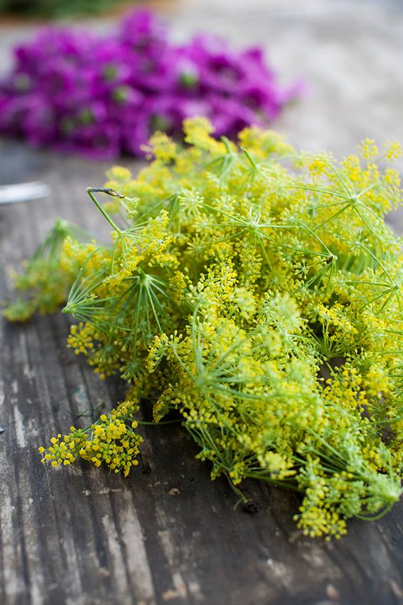 www.lucidlucid.com Photography