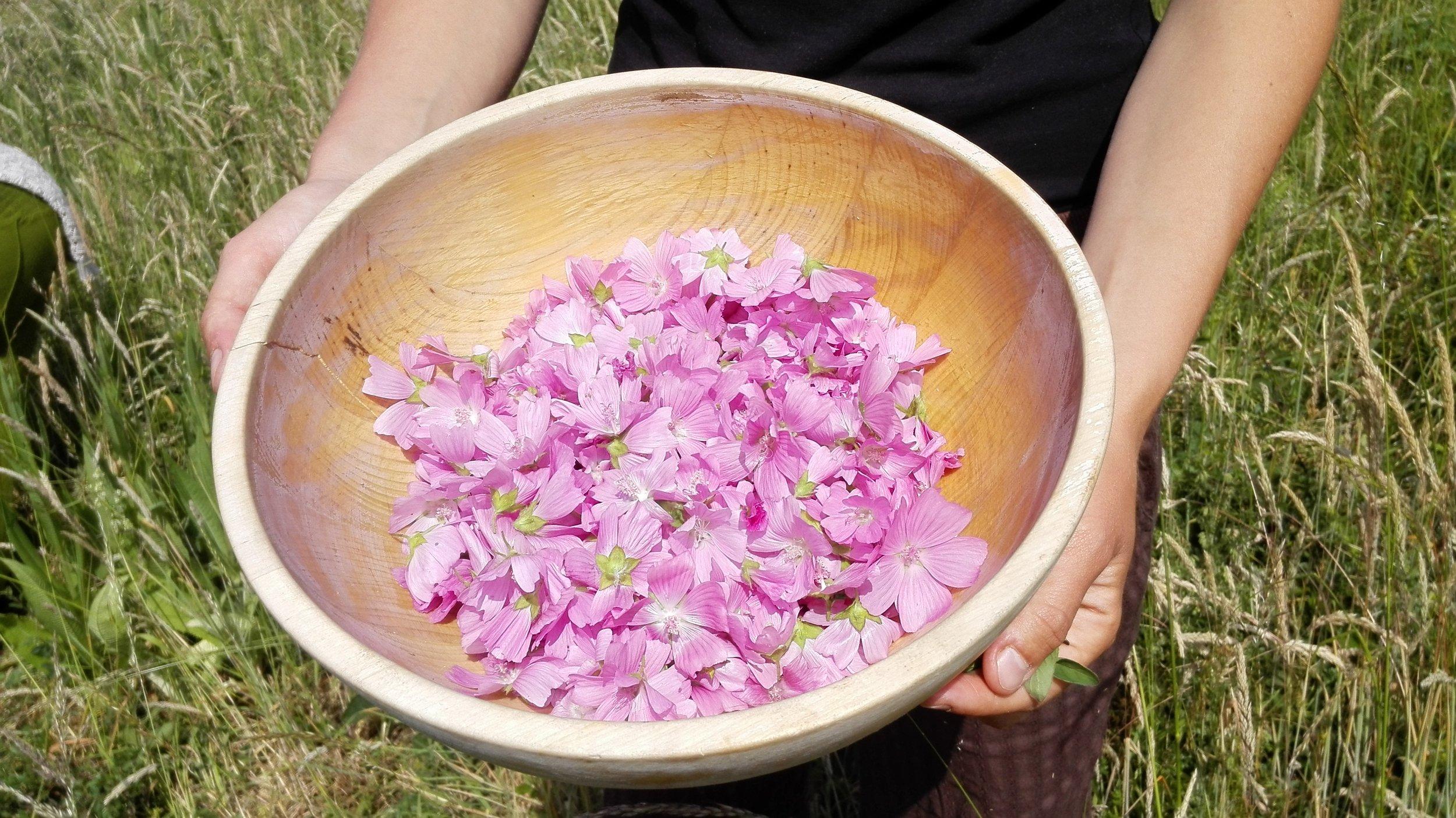 (Muskus)kaasjeskruid bloemen geplukt door cursisten op forest to plate activiteit.