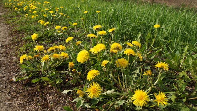 Foto: Flora van Nederland