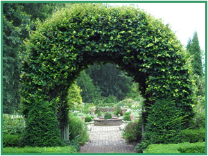 Install an arch.