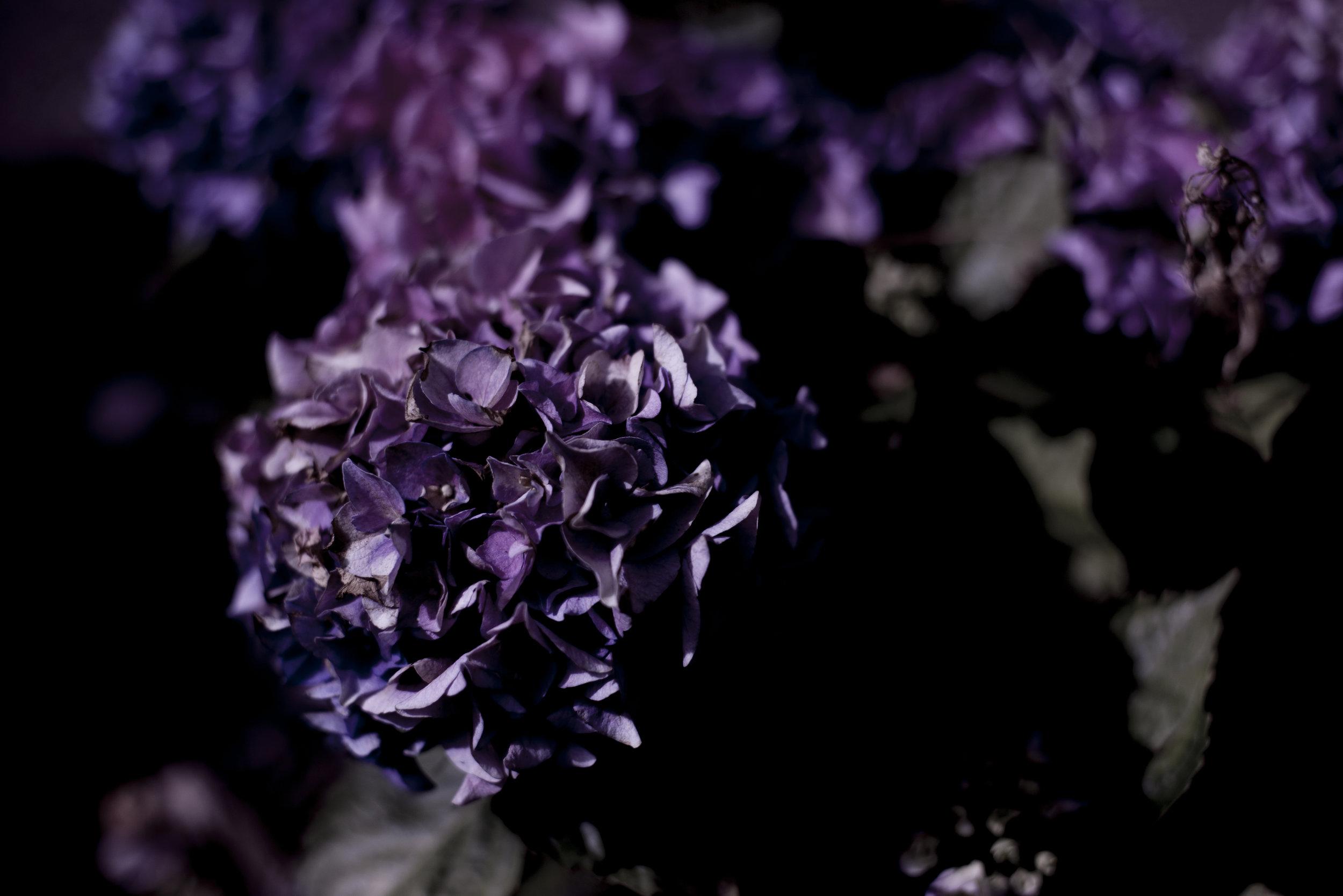 Zena Zialor-Flower2-Rubikspace.jpg
