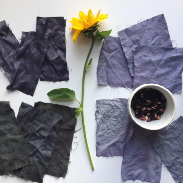 The amazing colors and hues of the Hopi sunflower dye