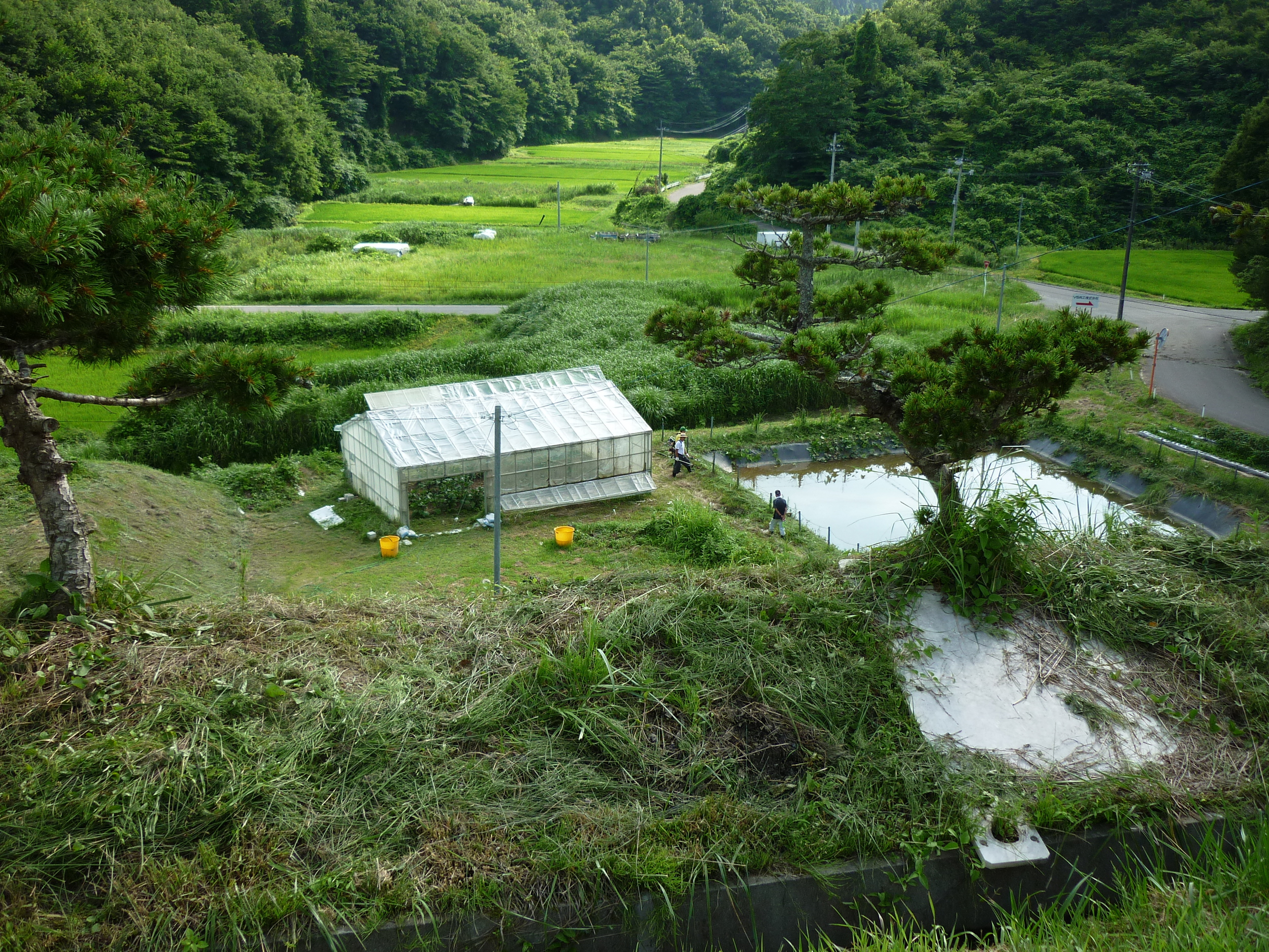 greenhouse and pond.JPG