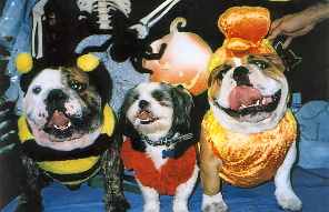 Dear Karen:  Thank you for helping us all get along. Sometimes being brothers is hard and we get into arguments and hurt each other. Things are much better since our Mom and Dad called you, and we even won a Halloween contest!  Tigger, Shaq and Dante