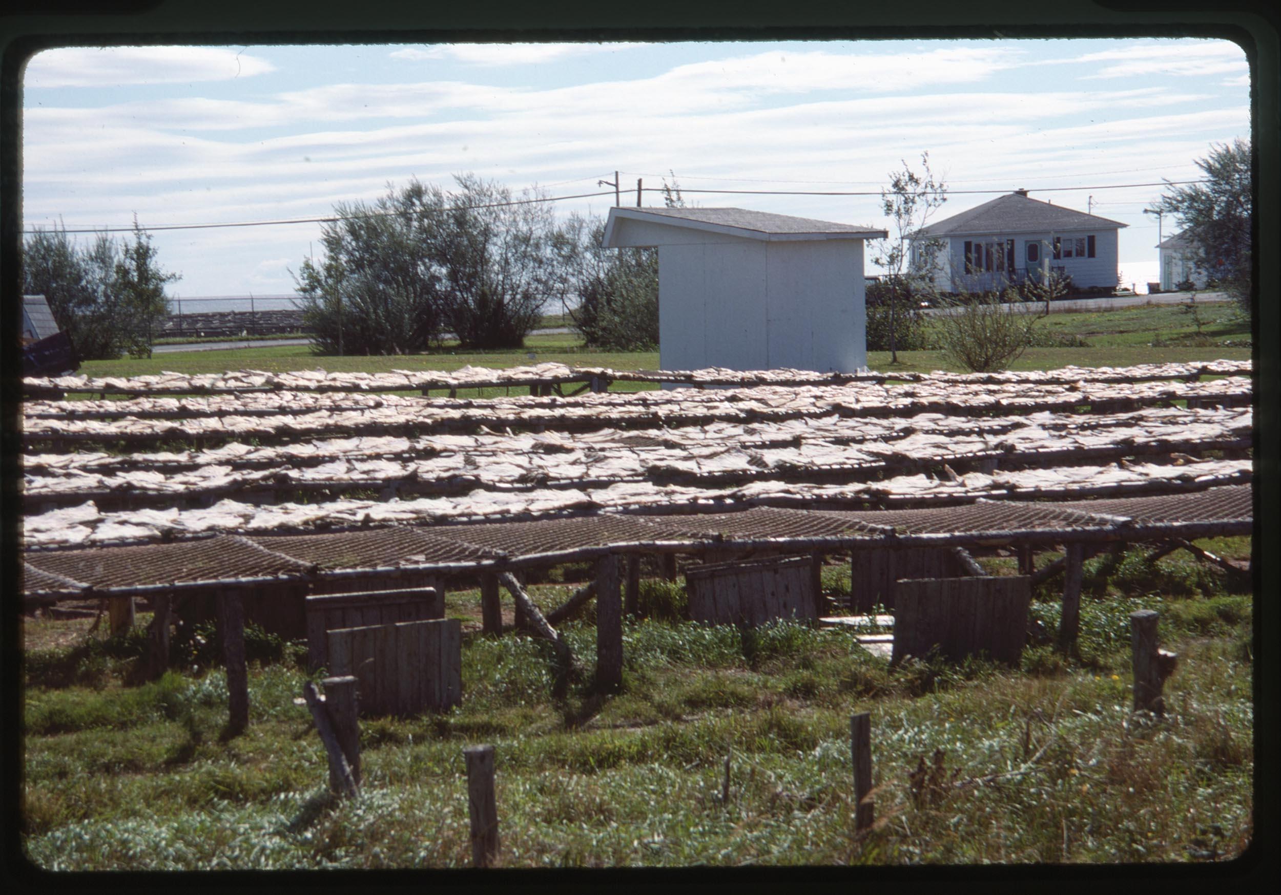 VAC1990-CANADA_40.jpg