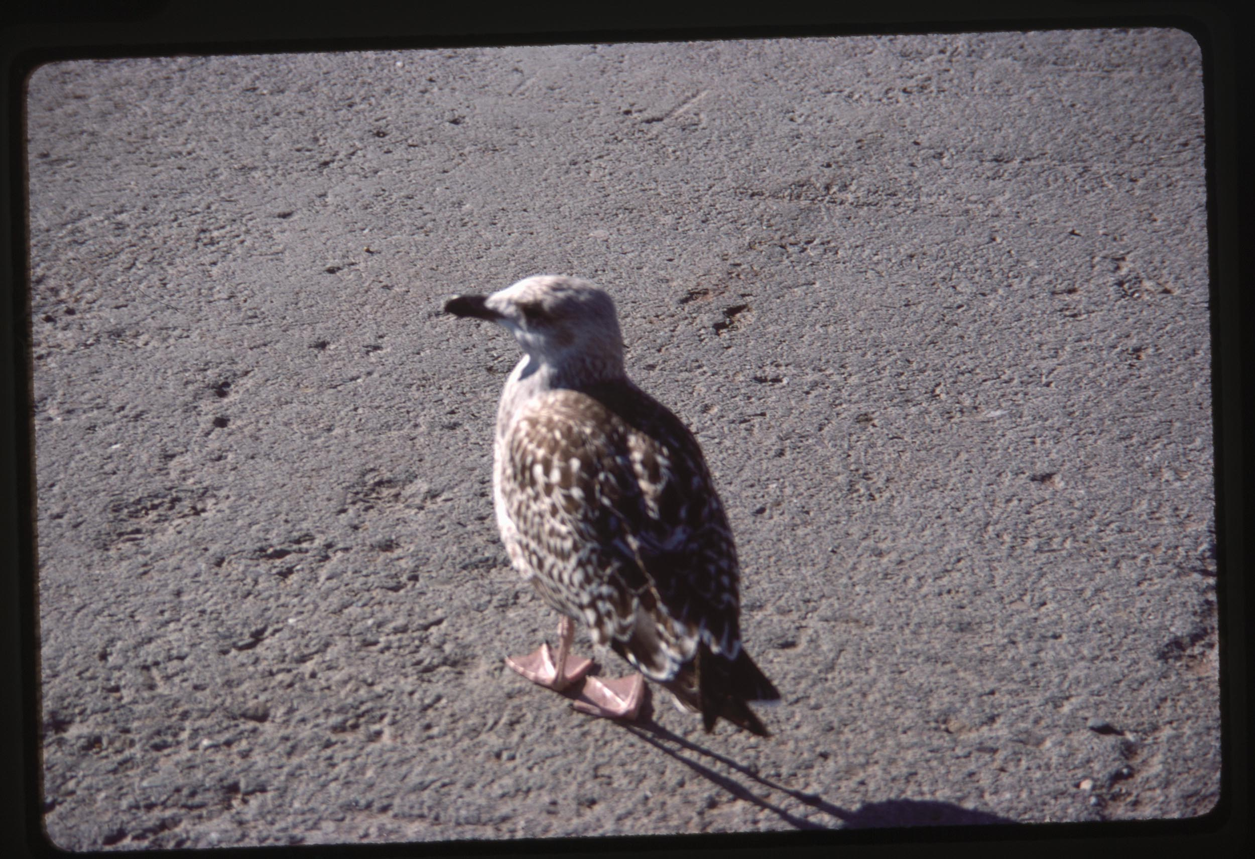 VAC1990-CANADA_52.jpg