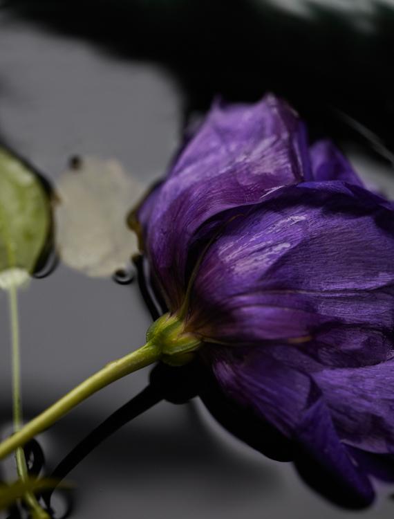 062311_al_flower_test_208_2.jpg