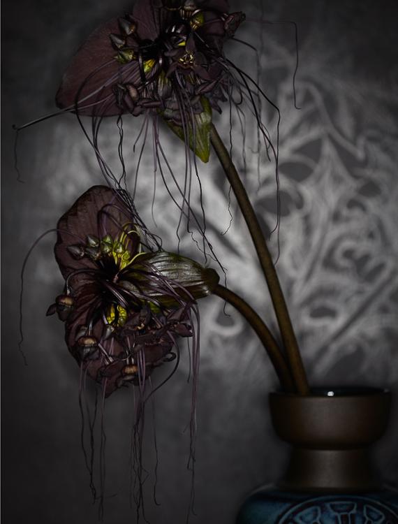 011112_Apt_Test_Flower_0023_RET.jpg