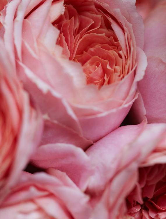 061511_flowers_032.jpg
