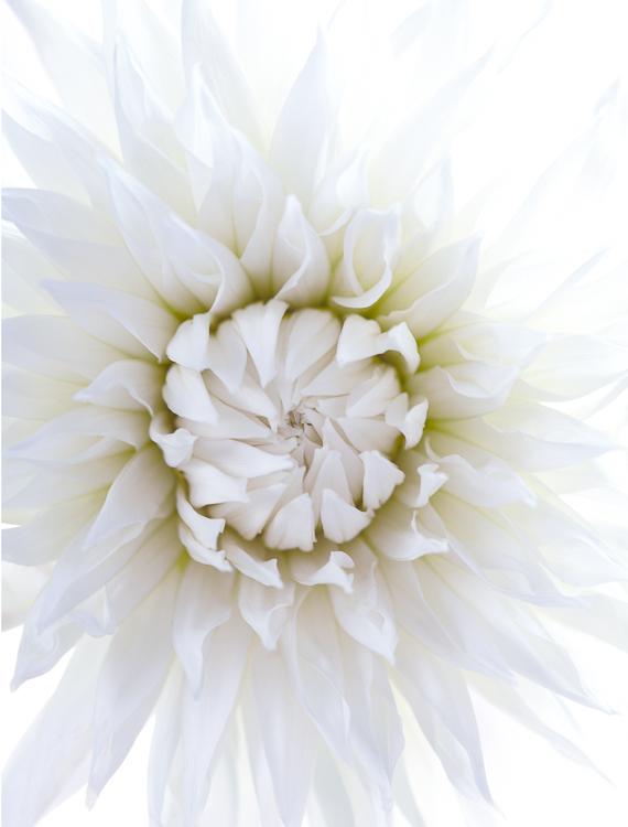 061511_flowers_097.jpg