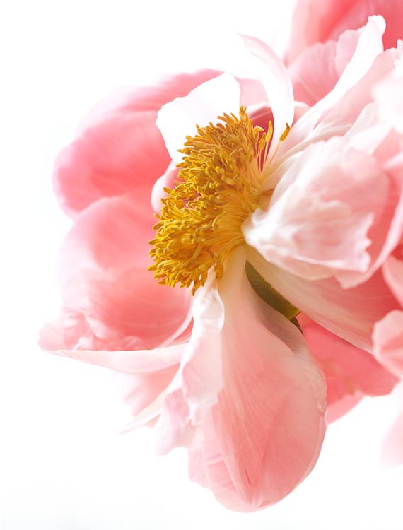 061511_flowers_139.jpg