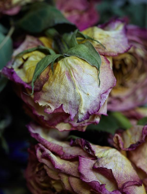 062311_al_flower_test_266.jpg