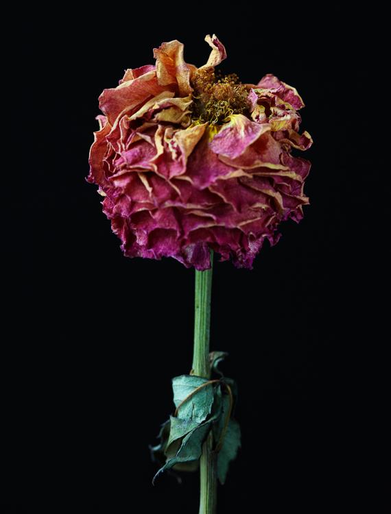 062311_al_flower_test_275_ret.jpg