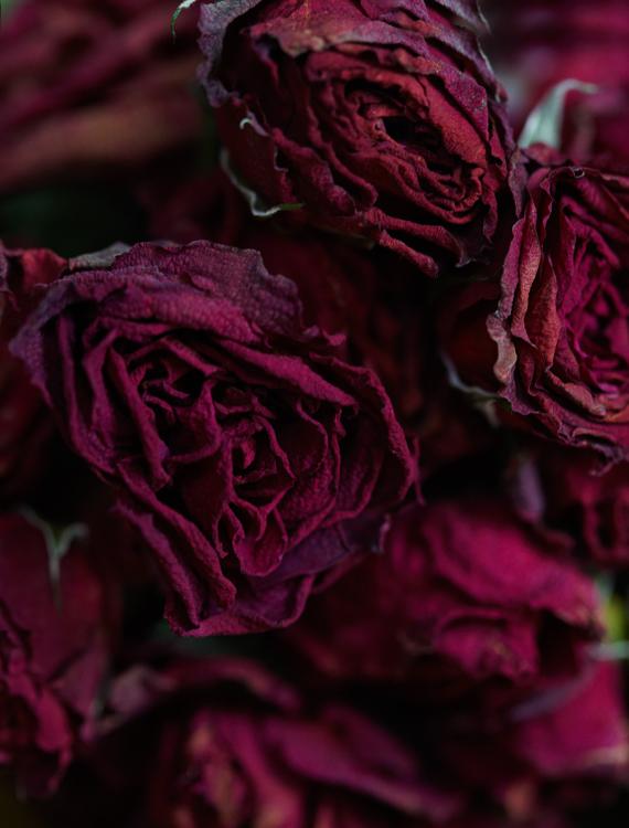 062311_al_flower_test_RT_262.jpg