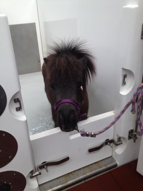 half door_mini horse.jpg