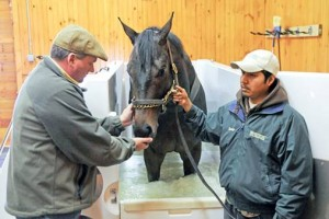 Orb in the ECB Spa at Fair Hill Training Center in Elkton, MD