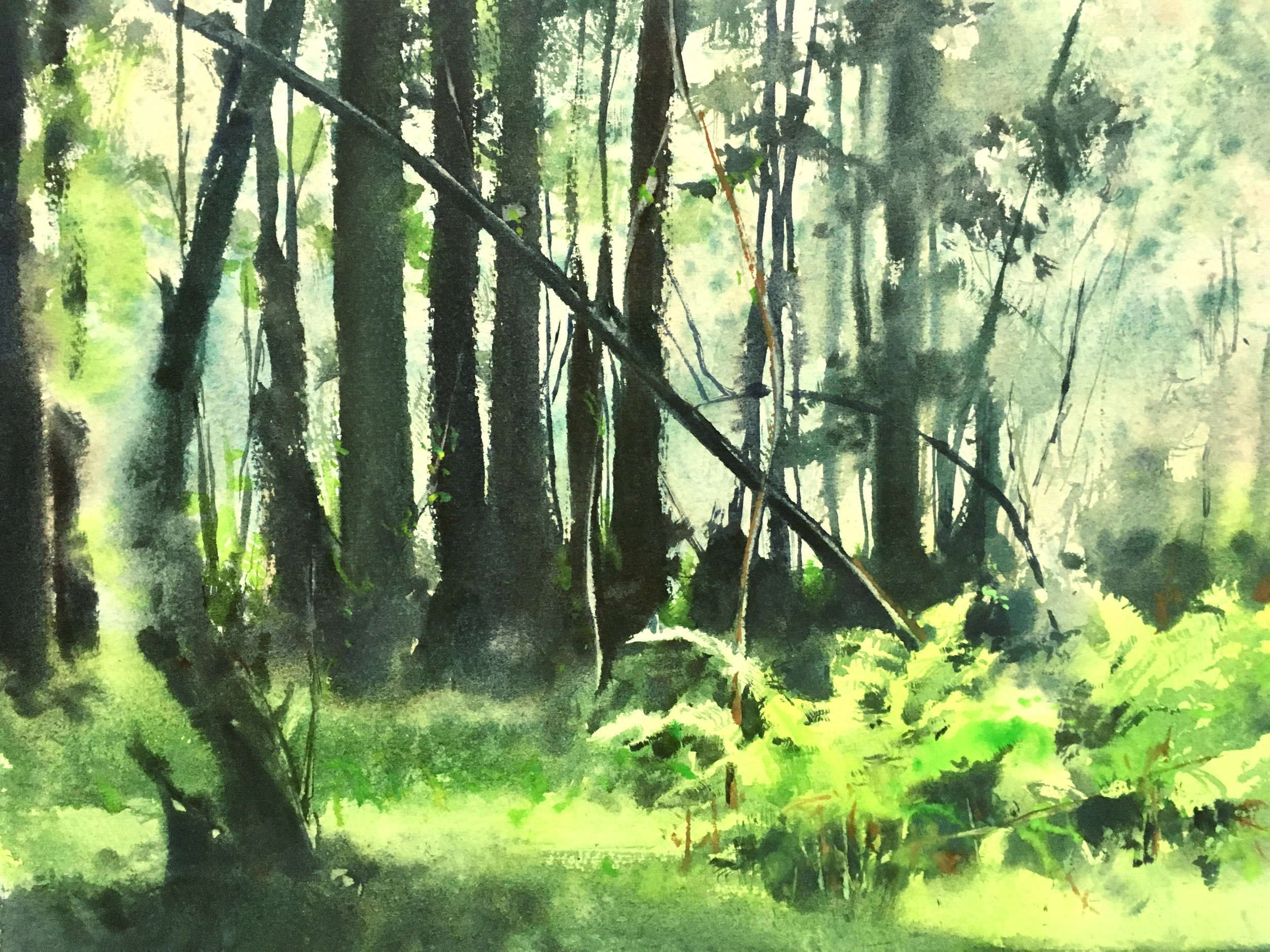 "a sample piece from my upcoming may show ""our redwoods"""
