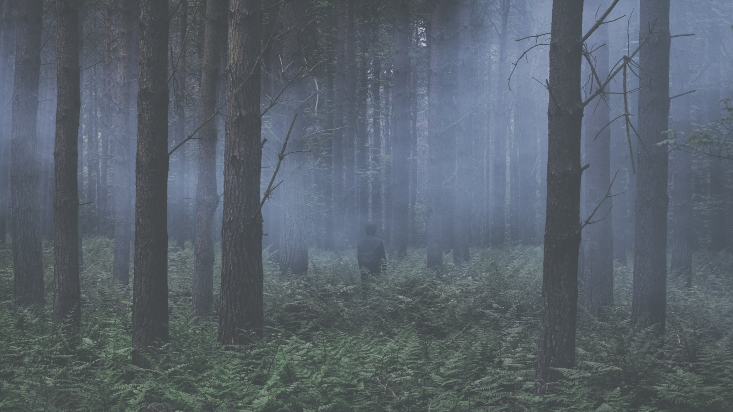Fade Out (Forest).jpg