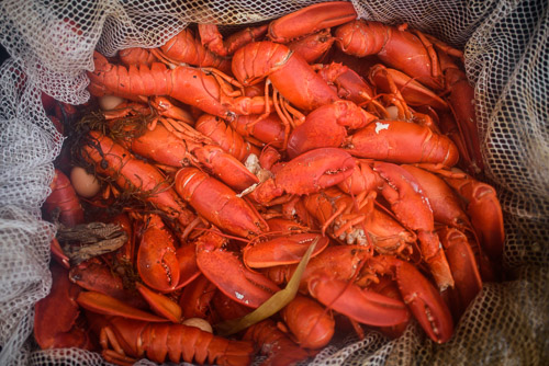 Maine Lobster Wedding.JPG