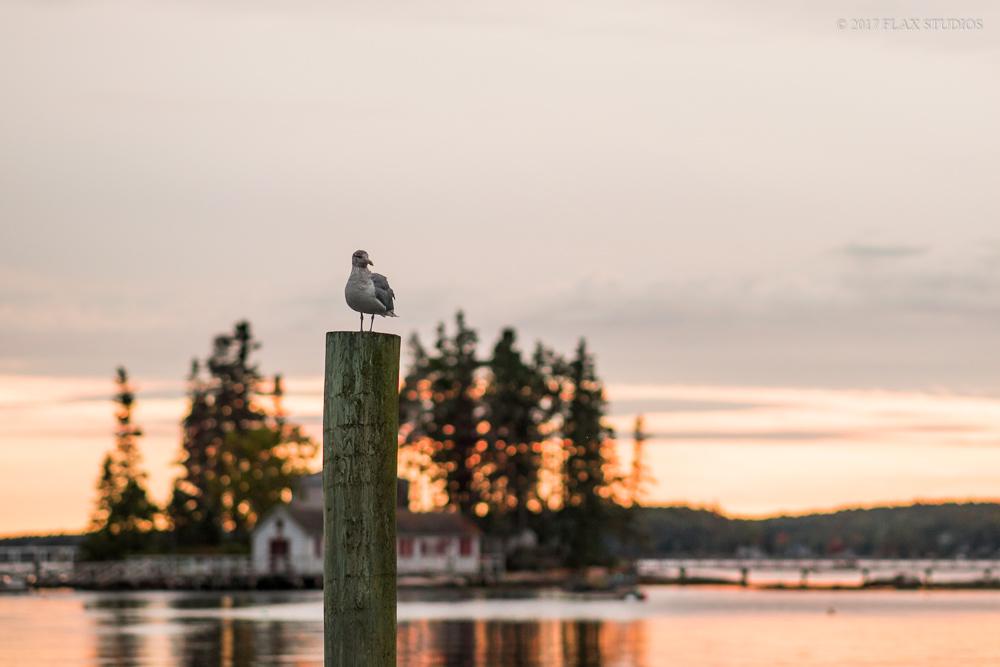 Boothbay Harbor Maine Event Photographers-21.JPG