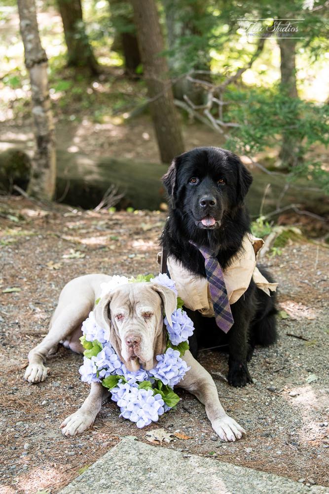 Sunday River Newry Maine Wedding Photography-6.jpg