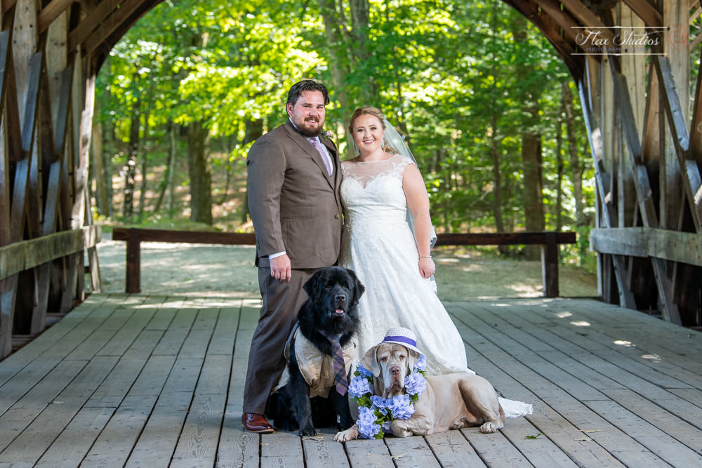 the bride and groom with their dogs