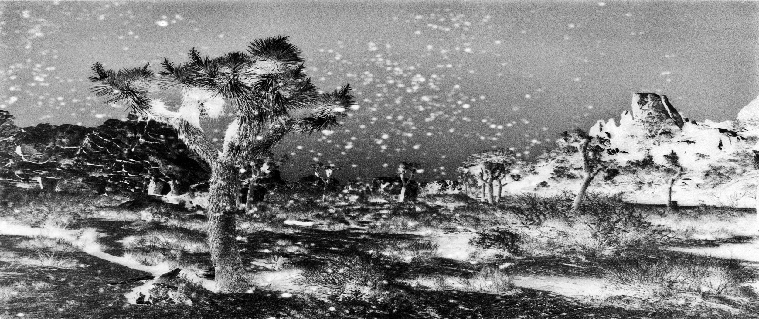 JoshuaTreeInfrared#4.jpg