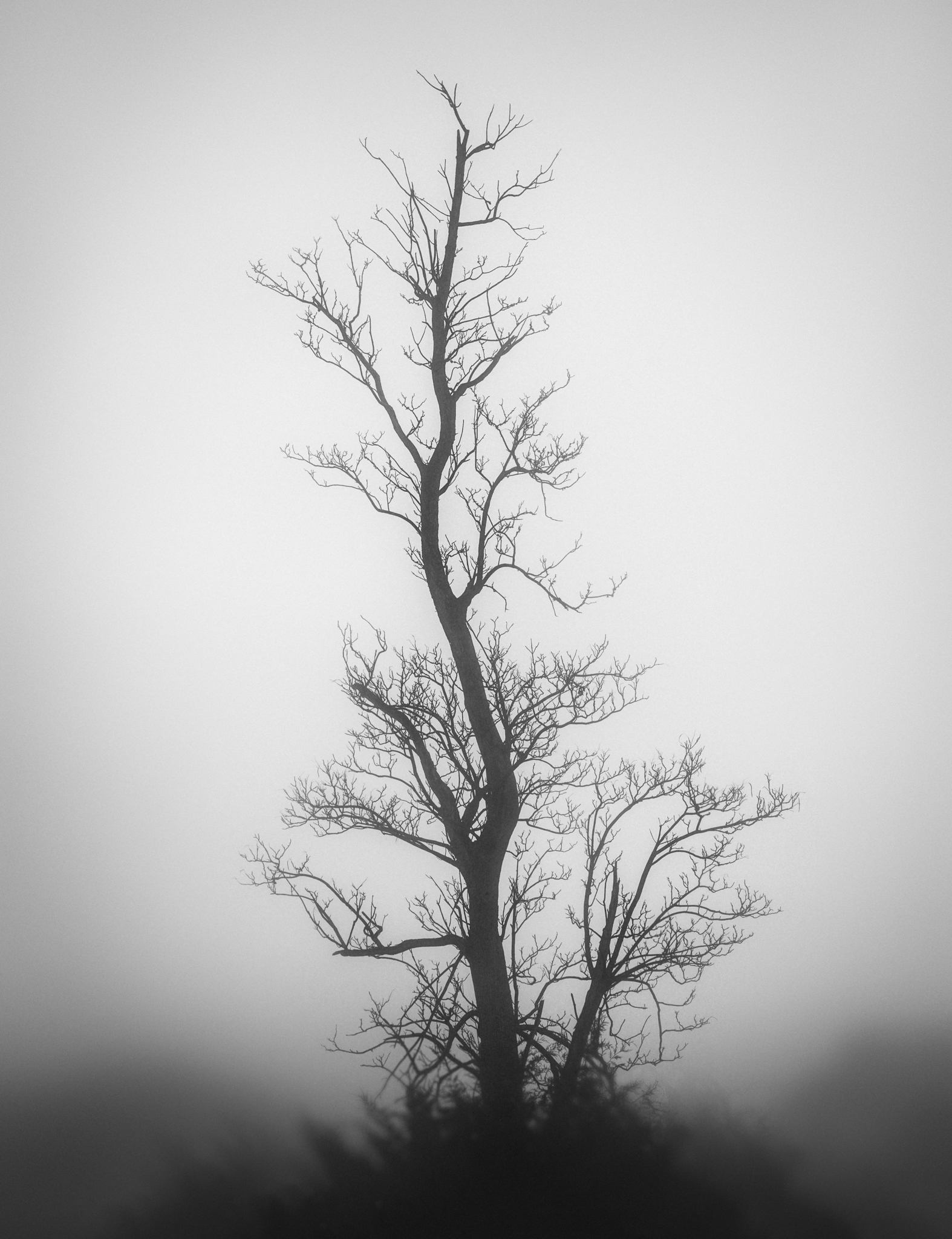 single tree (1 of 1).jpg