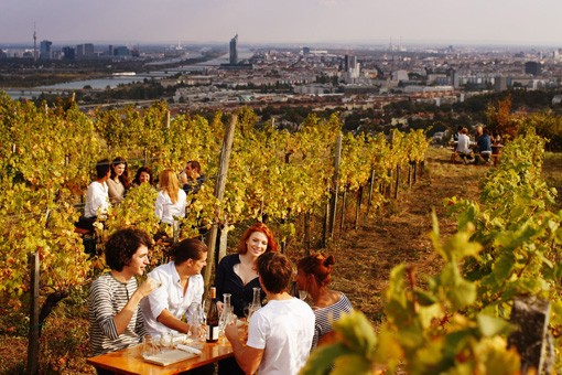 Vienna Vinyards © WienTourismus, Peter Rigaud