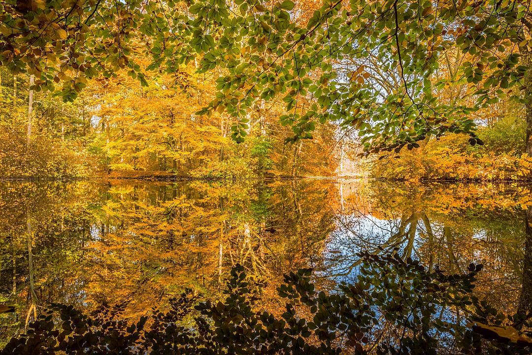 Autumn Rorschach