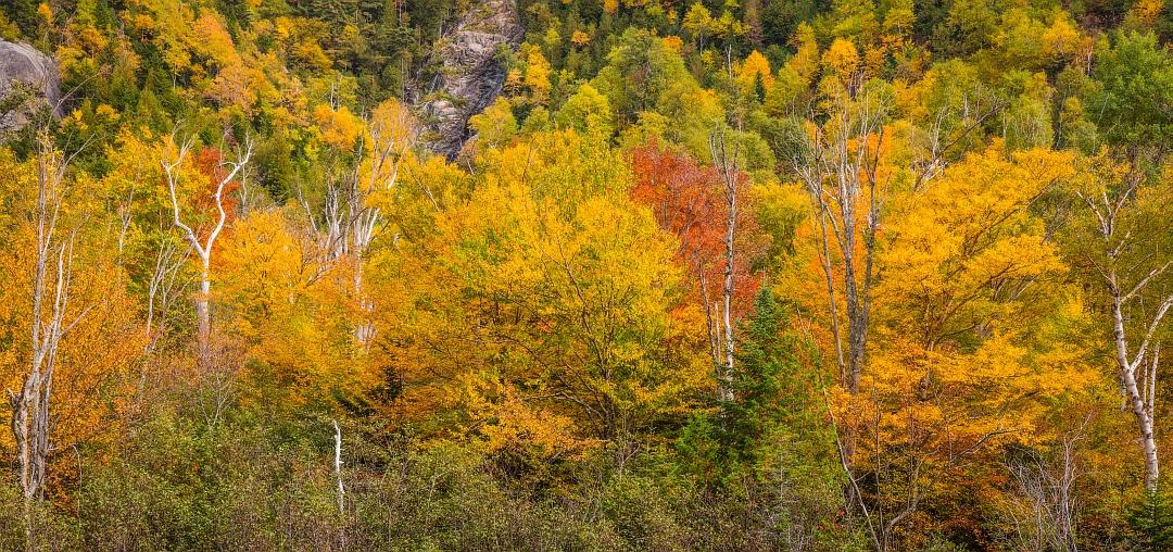 Adirondack Autumn_resized.jpg