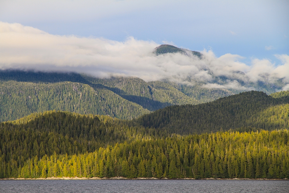 Granite mountains completely covered with trees - the Great Bear Rainforest