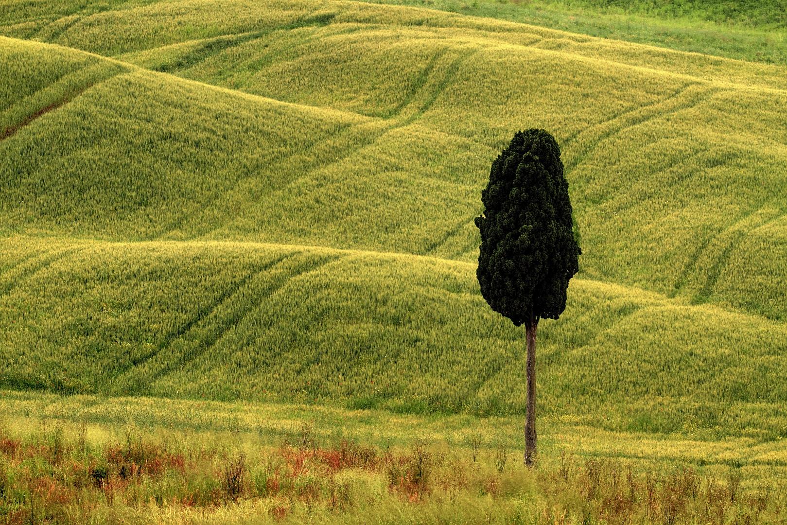 Last tree standing.jpg