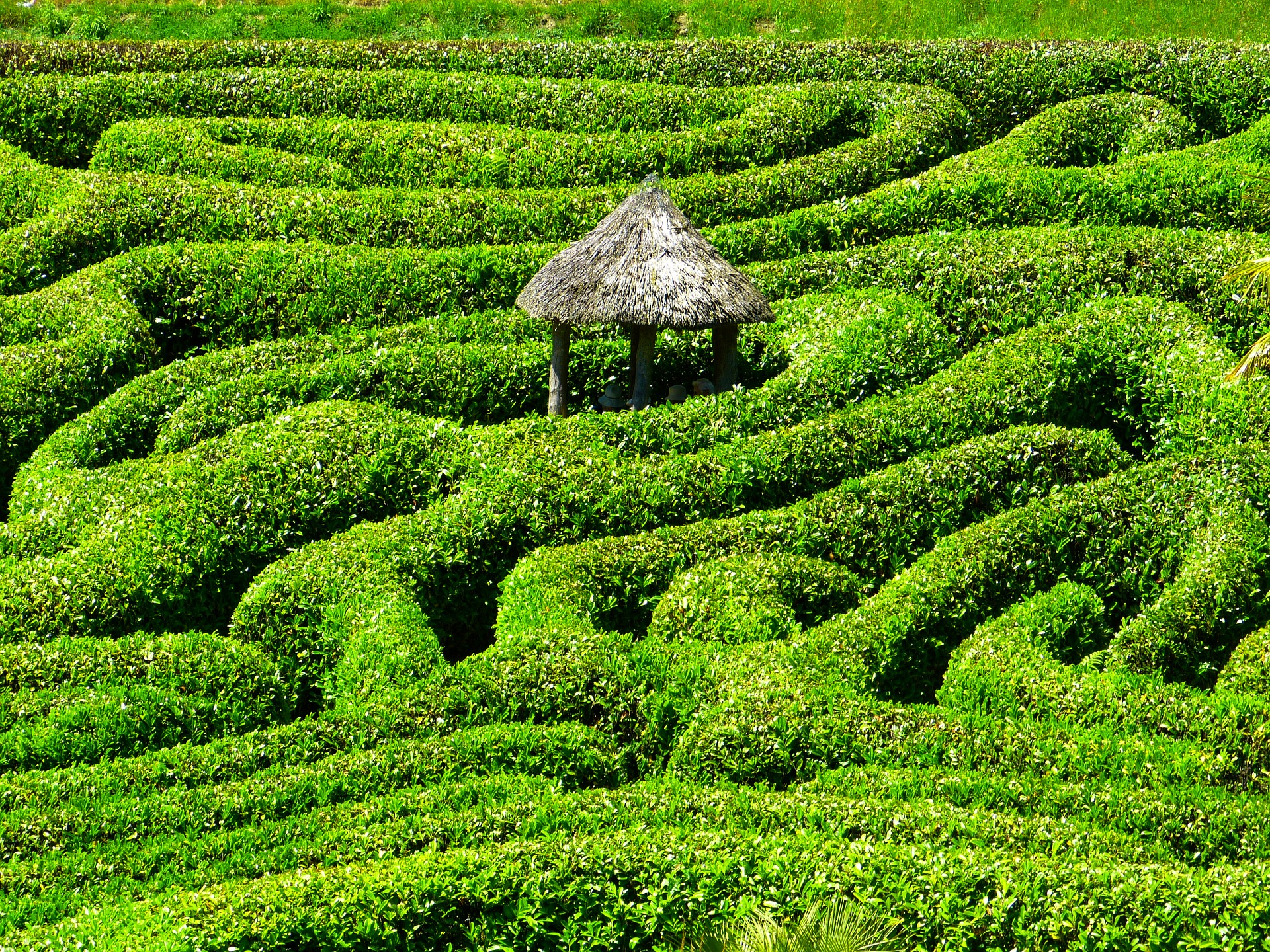 Without making your company purpose clear to your employees, you are no better off than a large company... your team will feel as if they are navigating a maze, unsure of where to turn and uncertain of how close they are to their goal.
