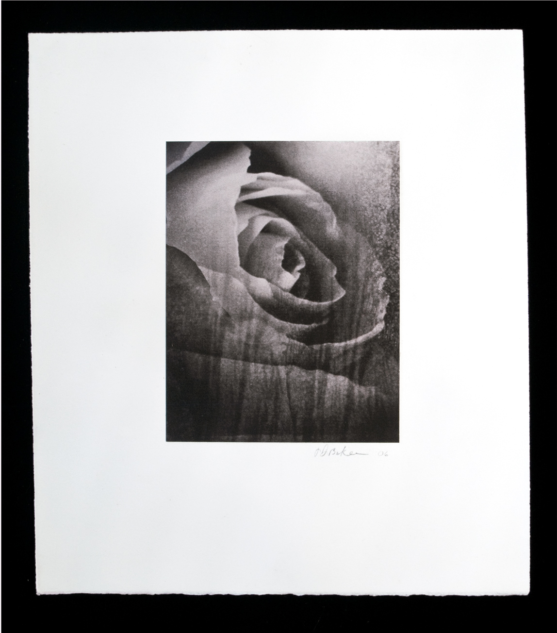 """Drowning Rose""  1998   6 ¾"" X 8 ⅝"" - 14 ½"" X 16 ½""  Chine colle, digital collage, inkjet printed on Somerset Natural  ,"