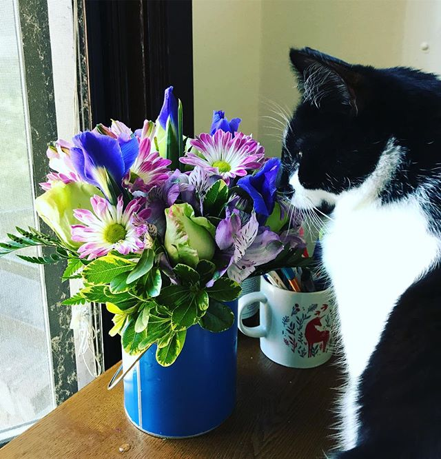 The kitter is demonstrating his mad face after I told him to stop eating my birthday flowers. 🖤🖤🖤 @lindalarsen62 @rlarsen_3412