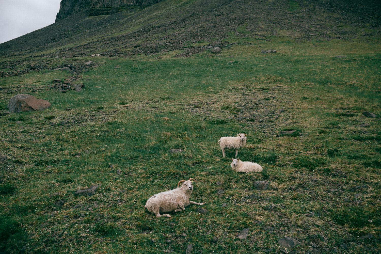 Iceland-4711.jpg