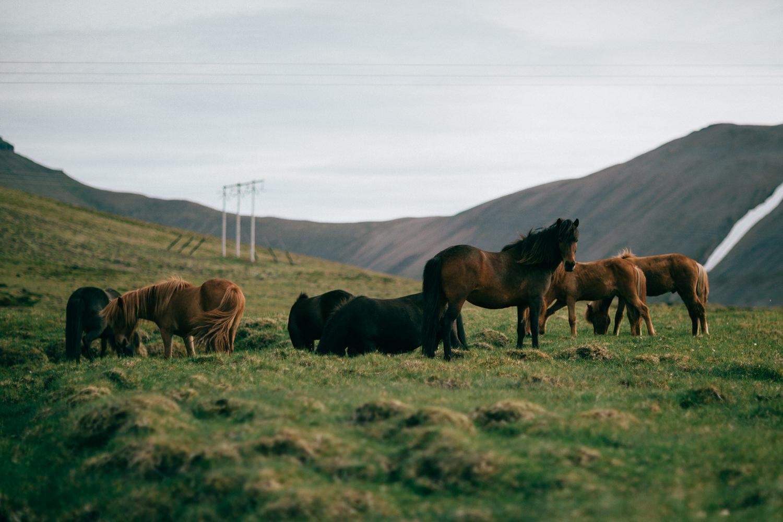 Iceland-9622.jpg