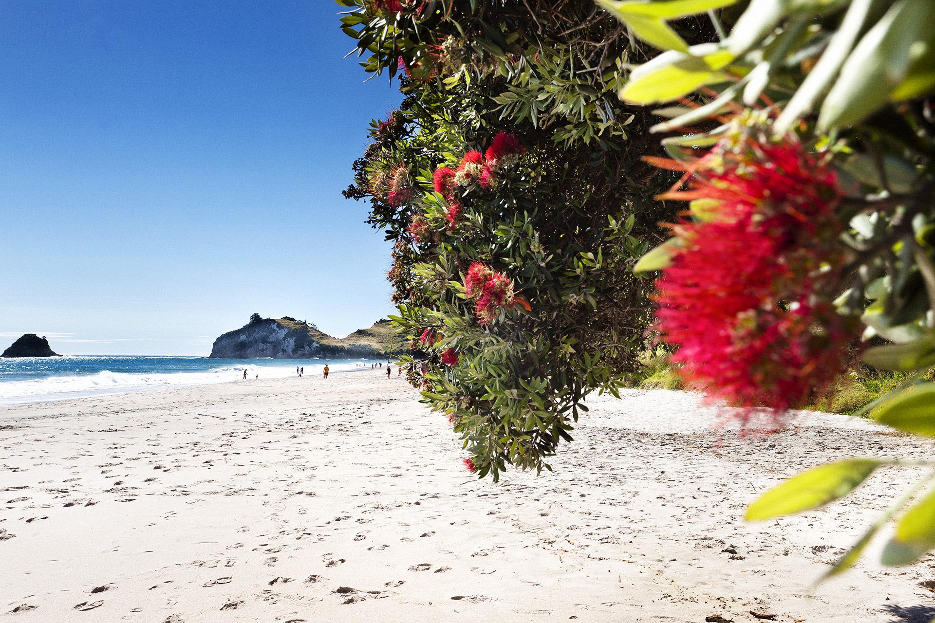 Beach Bloom