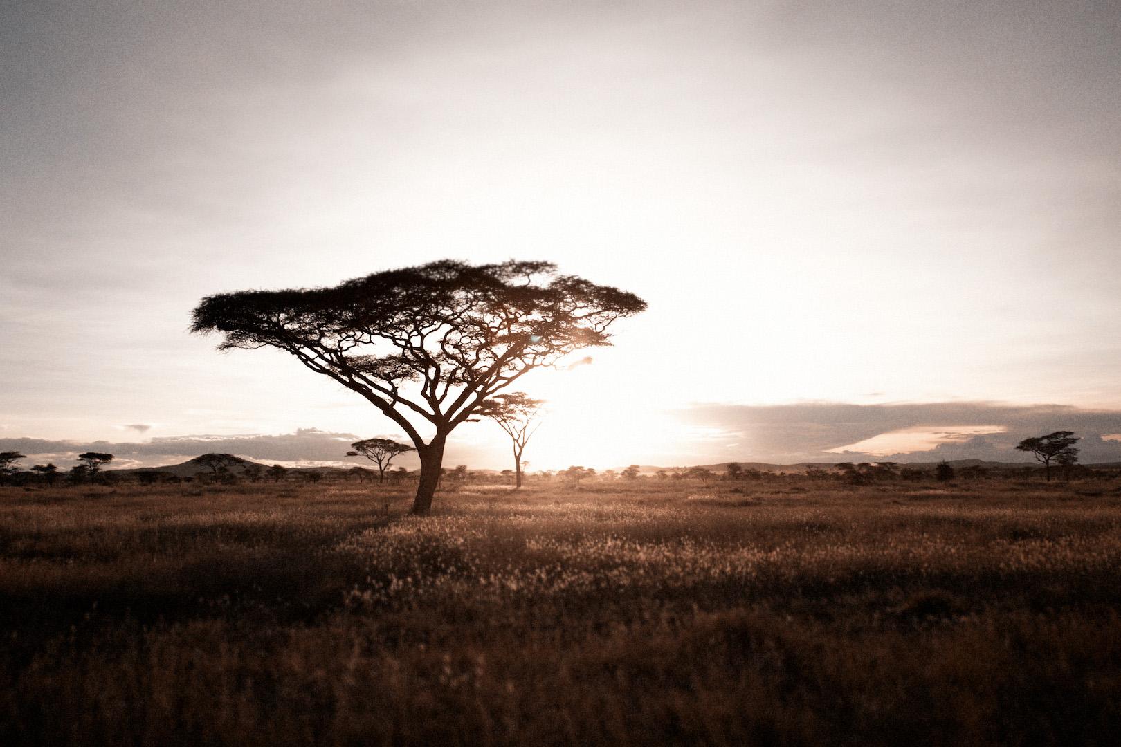 Tanzania 854.jpg